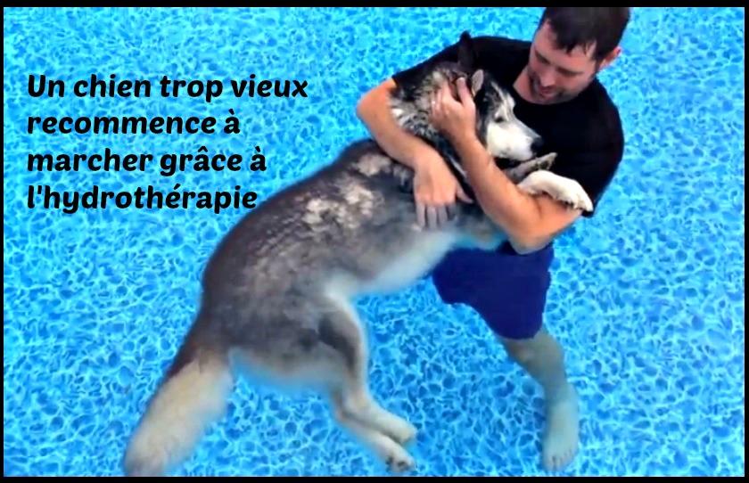 Extraordinaire une th rapie s 39 av re miraculeuse pour un for Piscine pour chien