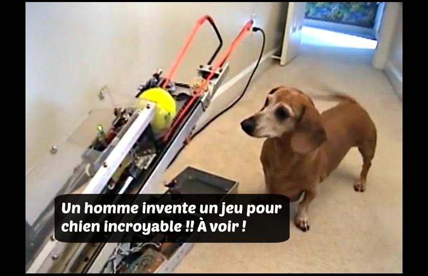 tout fait g nial une machine invent e pour servir de compagnon de jeu un chien. Black Bedroom Furniture Sets. Home Design Ideas