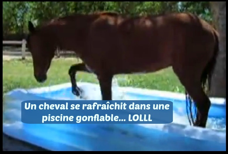 Animaux for Animaux gonflable piscine