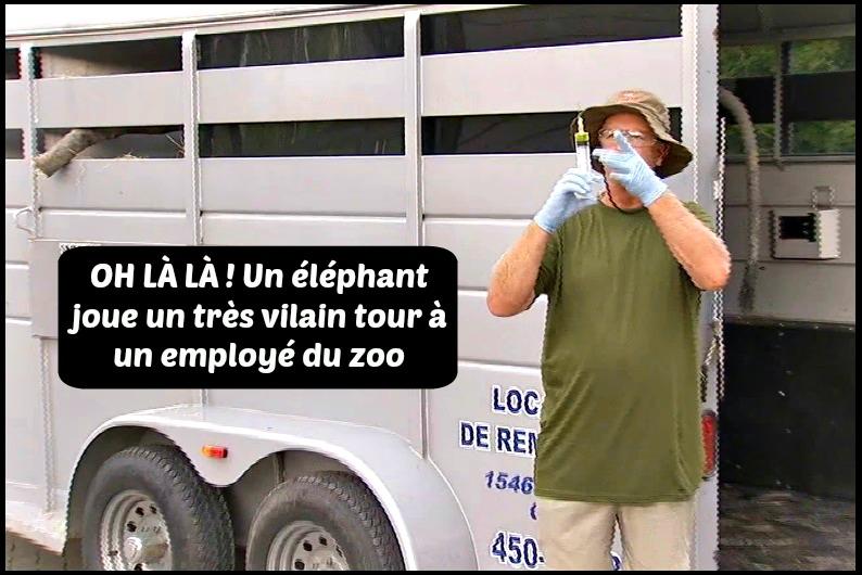 elephant zoo vaccin