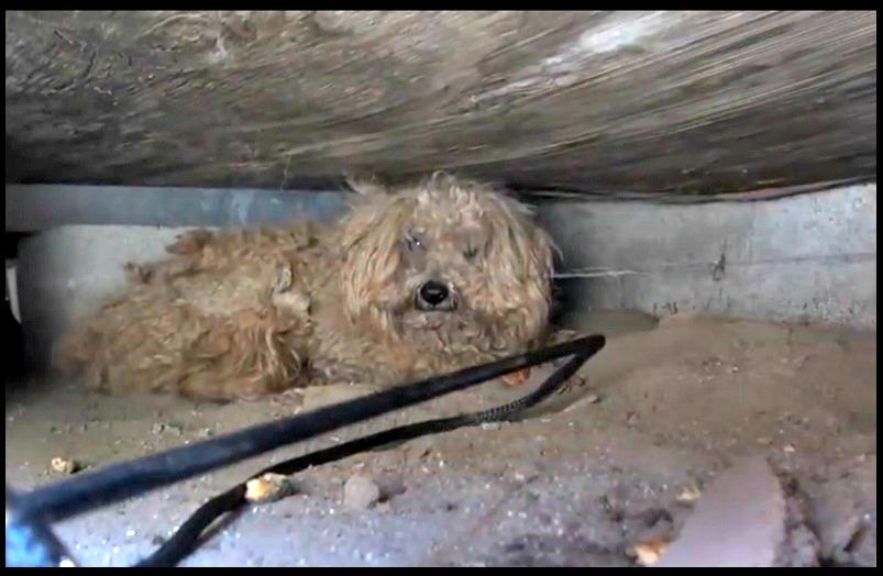 chien hachiko attend maitre un an