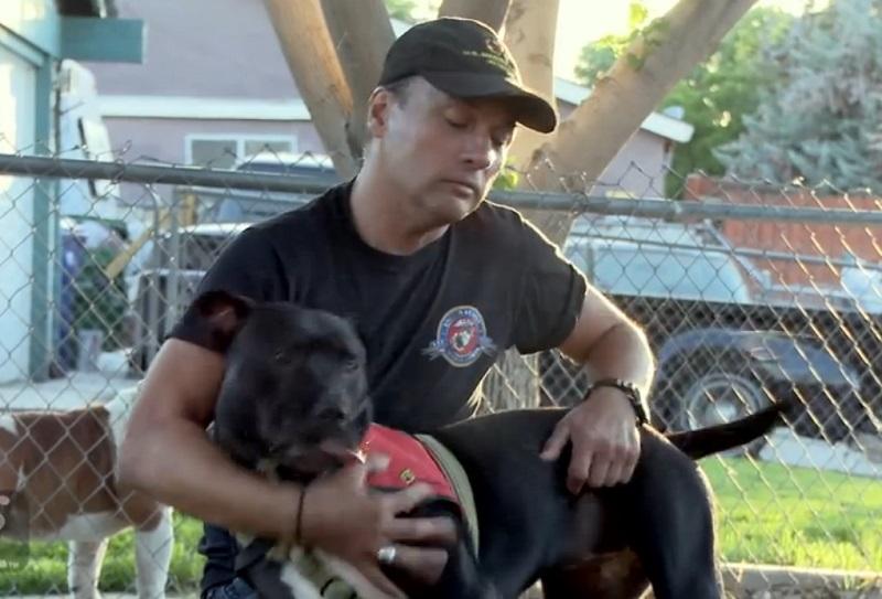 chien homme veteran usa