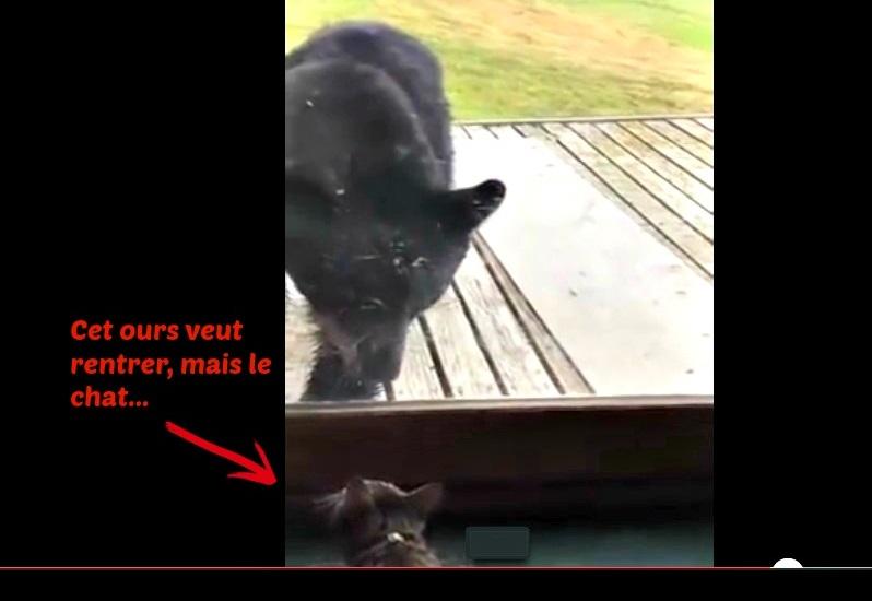 ours noir alaska chat courageux