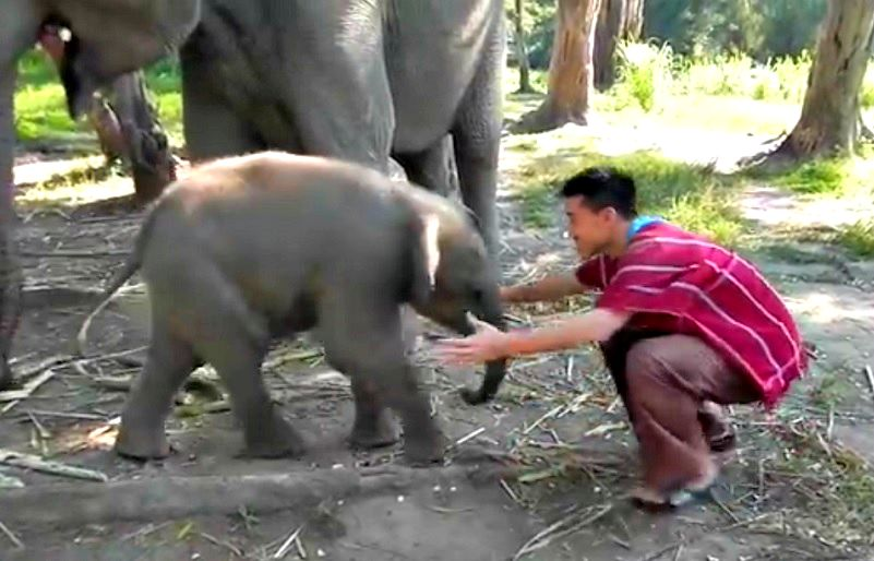 caresse elephanteau aime gardien