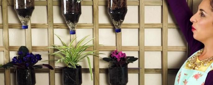 jardin interieur plante epice