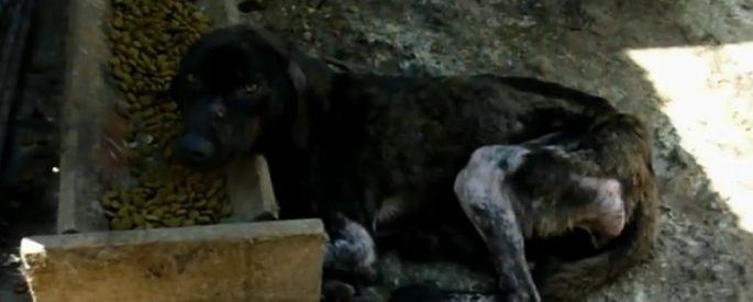 chien secouru sauvetage roumanie