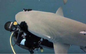 requin plongeur approche visage
