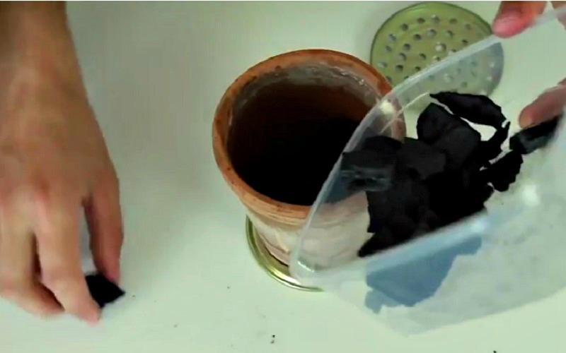 il met des briquettes de charbon de bois dans un pot en. Black Bedroom Furniture Sets. Home Design Ideas