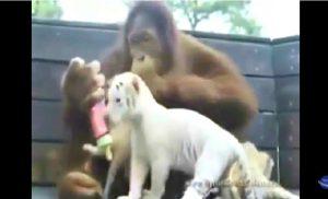 animaux geste gentil emouvant