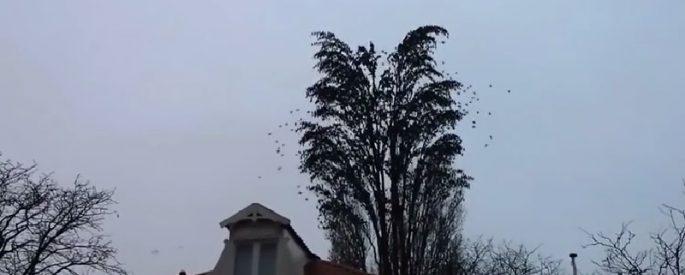 arbre geant oiseau video