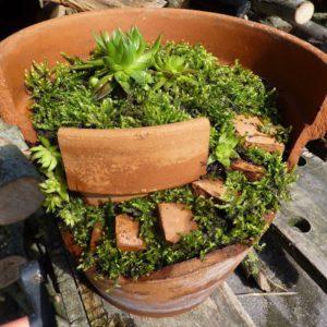 jardin miature pot cassee