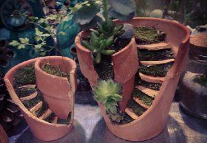 jardin miature pot cassee plante