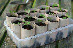 planter semer jardin bricolage