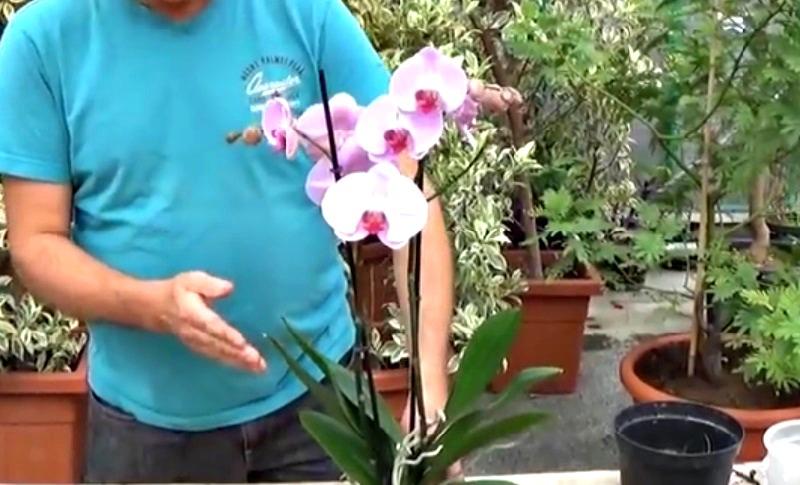 Voici comment faire refleurir une orchid e on vous d voile des conseils d 39 expert - Orchidee entretien apres floraison ...