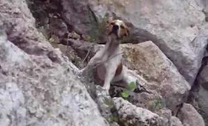 sauvetage chien ravin