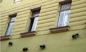 astuce fourmis maison naturelle