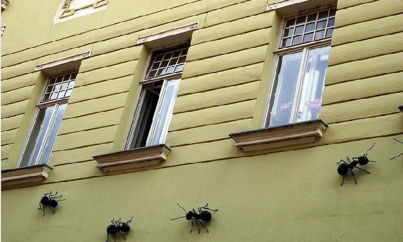 D barrassez vous des fourmis avant qu 39 elles n 39 entrent dans for Astuces contre les fourmis dans la maison