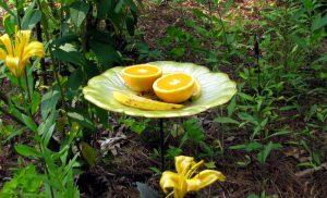 astuce jardin fleurs papillon
