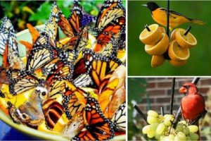 astuce pour jardin fleurs papillons