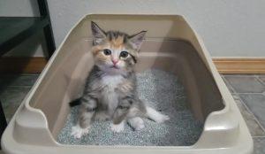chaton litiere drole