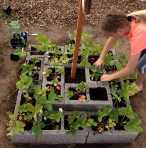 astuce bloc beton mini jardin