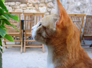 astuce chasser araignee chat