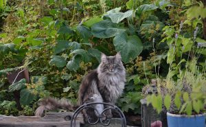 astuce jardin chat