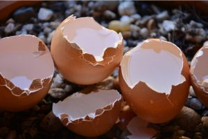 astuce jardin coquille oeuf compost