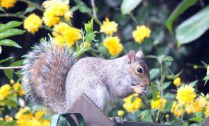 astuce jardin eloigner petit rongeur