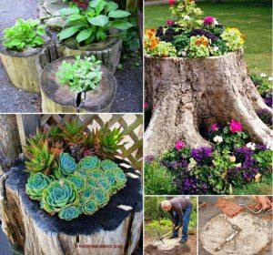astuce jardin fleurs arbre