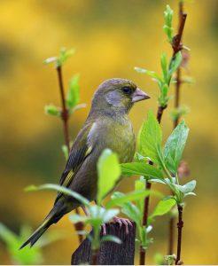 astuce jardin oiseau insecte