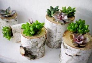 astuce jardin succulente fleurs