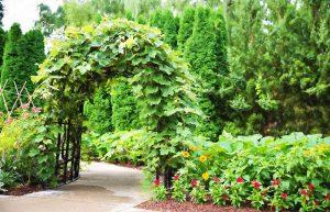astuce jardin vert