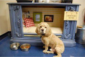 bricolage astuce chien maison