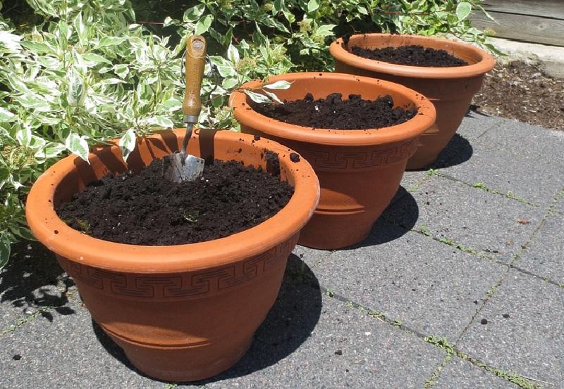 Saviez vous qu 39 on peut faire pousser un ananas partir d 39 un autre et voici comment faire - Comment planter un ananas ...