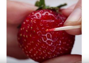 planter fraise jardin