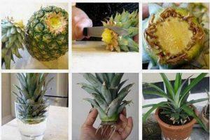 astuce ananas