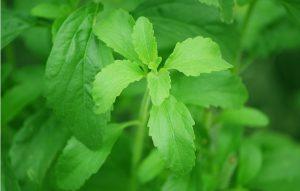 astuce arreter fumer plante stevia