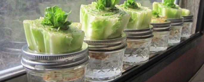 astuce faire pousser salade jardin
