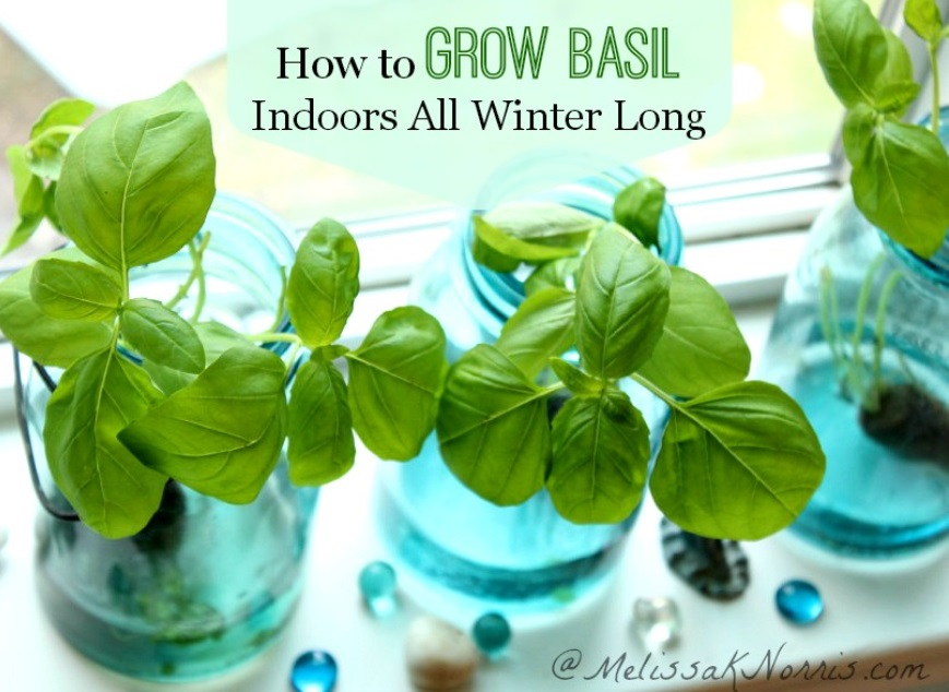 12 fines herbes que vous pouvez faire pousser dans l 39 eau et pendant toute l 39 ann e. Black Bedroom Furniture Sets. Home Design Ideas