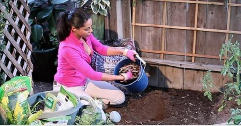 elle met cet ingr dient sous ses plants ils produisent 2x plus et garde les parasites loin. Black Bedroom Furniture Sets. Home Design Ideas