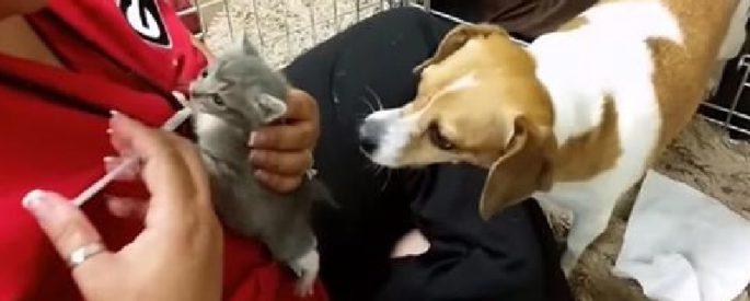 chaton chien