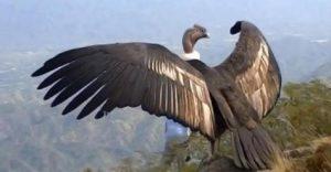 condor oiseau libre ciel