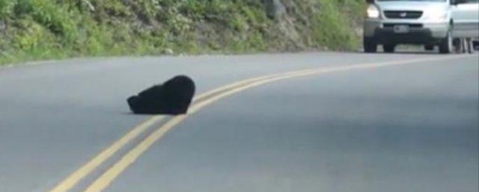 ourson dans la rue video