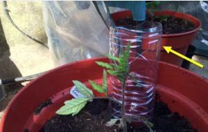 plant jardin astuce arroser