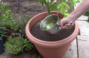 plant jardin astuce recuperer eau