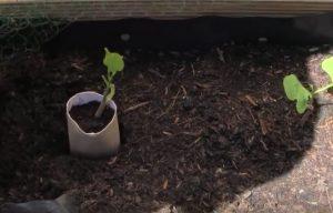 plant jardin astuce rouleau