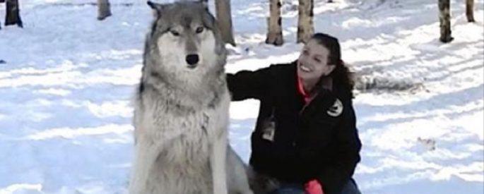 video loup geant bois femme