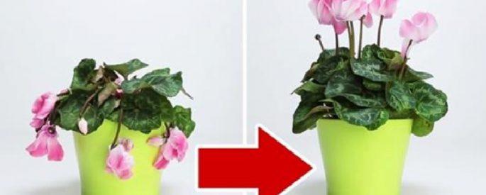 astuce plante jardin