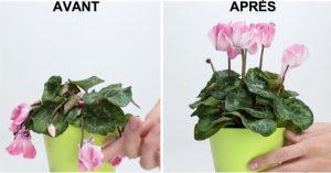 avant apres plante